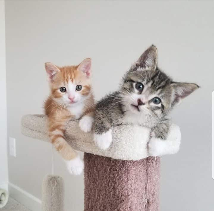 Curious grey and orange kittens on stand