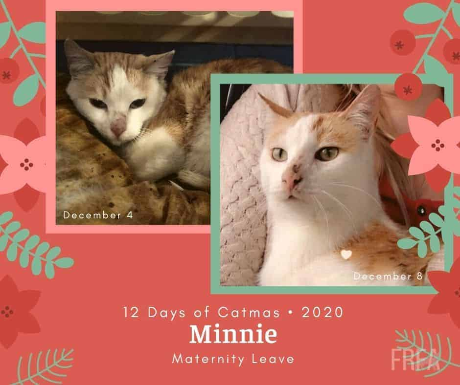 Minnie before and after pictures